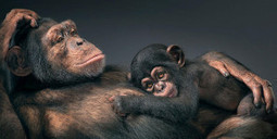 Than Human: animal photography by Tim Flach - Lost At E Minor | Hitchhiker | Scoop.it