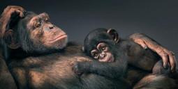 Than Human: animal photography by Tim Flach - Lost At E Minor | Vídeo, fotografía, luz y color | Scoop.it