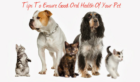 Handy Guide For Your Pet's Good Dental Healt | Animal Hospital Mississauga - Affordable Pet Vet Services | Scoop.it