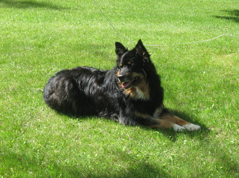 Ashley's Canine Corner: Caring For Your Senior Dog's Teeth – Importance of Dental Care | Family Pets | Scoop.it