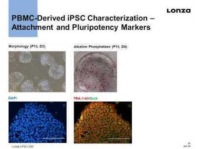 Lonza Webinar: Convenient Generation and Culture of Induced Pluripotent Stem Cells | Stem Cells & Tissue Engineering | Scoop.it