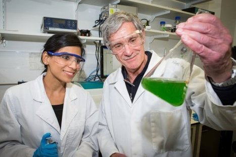 Another way to photosynthesize hydrogen from high-tech 'leaves' | Digital Sustainability | Scoop.it