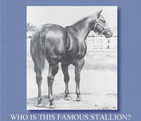 Name the Horse and be eligible for Circle Y Breast Collar | Today's Horse Sense | Scoop.it