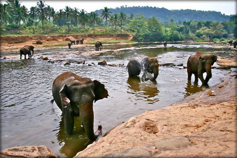 Pinnawala: close encounter with elephants | Fractions of the world Travel blog | Scoop.it
