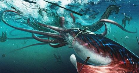 How we found the giant squid | ScubaObsessed | Scoop.it