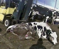 "First ""Ag-Gag"" Prosecution: Utah Woman Filmed a Slaughterhouse from the Public Street 
