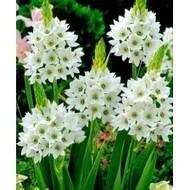 Winter Flower Bulbs, Buy flower seeds online, Flower seeds online | Buy flower seeds online, Flower seeds online, Garden seeds, Flower seeds, Herb seeds | Scoop.it