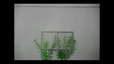 Une nouvelle cape d'invisibilité parvient à faire disparaître des animaux | tech | Scoop.it
