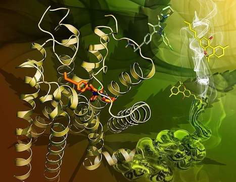 Structure of primary cannabinoid receptor is revealed | Nurse Innovators | Scoop.it
