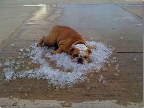 You know it's hot when ... | Bizarre & Weird | Scoop.it