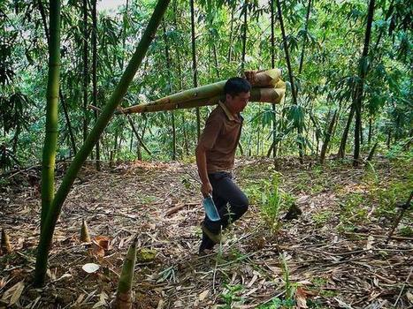 A Technology Revolution to Curb Illegal Logging - World Resources ... | Environmental crimes | Scoop.it