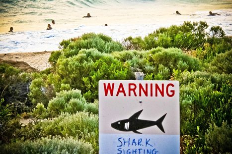 More Than 300 Sharks In Australia Are Now On Twitter | Augmented learning | Scoop.it