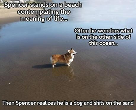 Twitter / ItsYourPalJesus: Dogs....idiots http://t.co/wN5fElR7sQ | Funny and cute animals | Scoop.it