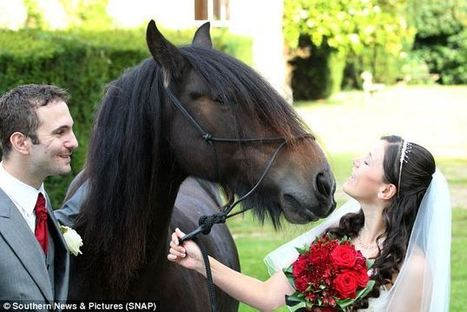 Weddings always stirrup the emotions: Horse-mad bride's mount plays key role in her wedding - by bringing along the rings | Western Weddings | Scoop.it