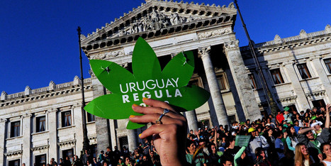 The Beginning of the End: The Top 10 Drug Policy Stories of 2013 | Cannabis News | Scoop.it