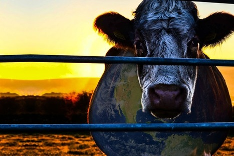 EXCLUSIVE: Interview With Directors Of 'Cowspiracy: The Sustainability Secret' On Netflix, A Controversial New Documentary | Nature Animals humankind | Scoop.it