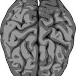 Exchange Your Brain in Mind | Healthylife | Healthy Life|Free health and fitness Doctor. | Scoop.it