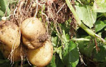 PepsiCo Reveals Global Agri Plans   Nature + Economics   Scoop.it