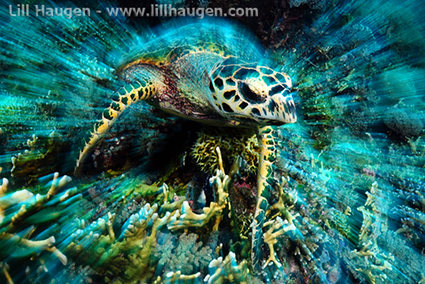 How to Use the #ZoomEffect #Underwater  #PhotographyGuide   Rescue our Ocean's & it's species from Man's Pollution!   Scoop.it