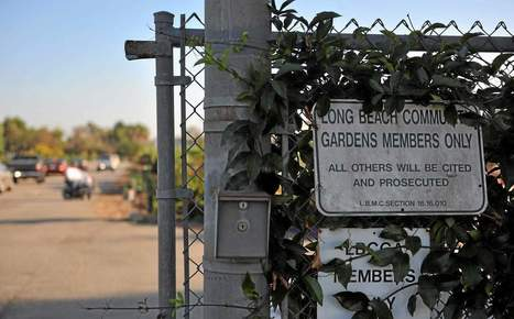Long Beach Community Garden beset by weeds of conflict | Sustainability & Community Resilience | Scoop.it