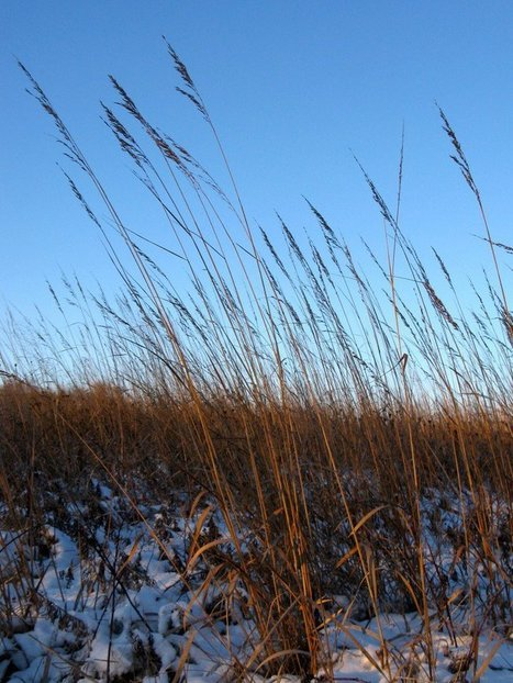 What the Indian Grass Revealed -- Some Thoughts on Learning in a Time of Standards | Inquiry Based learning | Scoop.it