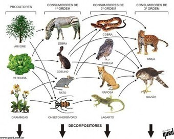 cadeia-alimentar | Aula de biologia | Scoop.it