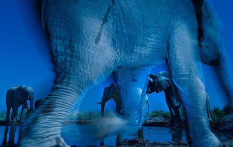 Wildlife Photographer of the Year 2013 Winners and Honorable Mentions | Colossal | Reflejos | Scoop.it