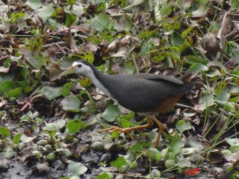 Circuit d'observation des oiseaux en Inde | Voyage photographie en Inde | Scoop.it