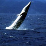 Save the Whales: Environmental Groups Target Yahoo! | Consumer Media Network | Whales | Scoop.it