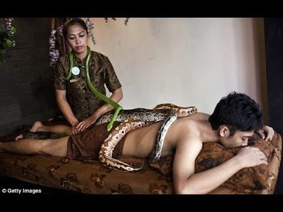 Indonesian spa gives massages by draping your body in SNAKES - METRO QUBE | METROQUBE | Scoop.it
