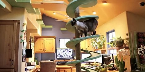 Man Transforms His Home Into A Playground For His Cats | Xposed | Scoop.it