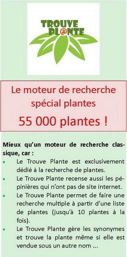 Trouver une plante : 55571 végétaux à portée de clic ! | pour mon jardin | Scoop.it