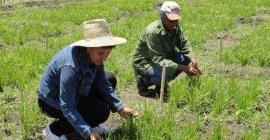 En Cuba, las mujeres rurales contribuyen a la seguridad alimentaria | Genera Igualdad | Scoop.it