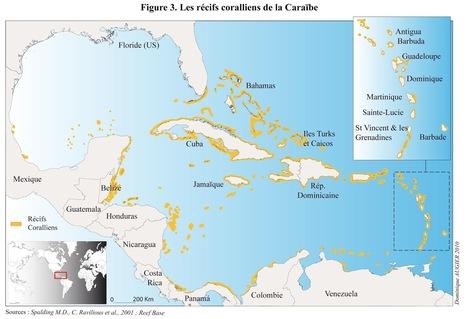 Réchauffement climatique : 80% des récifs coralliens des Caraïbes ont déjà disparu | Naviguer dans les caraïbes | Scoop.it