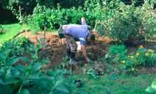 Ethical living: how can I become more self-sufficient? | 100 Acre Wood | Scoop.it