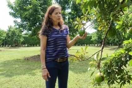 Espèces invasives : alerte en Floride, la mouche orientale des fruits attaque ! | EntomoNews | Scoop.it