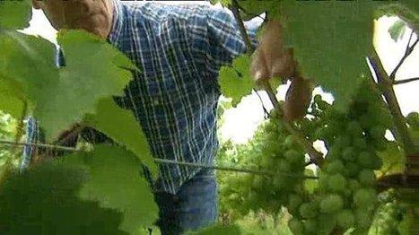Etre producteur de vins bio en Alsace - France 3 Alsace | Chimie verte et agroécologie | Scoop.it