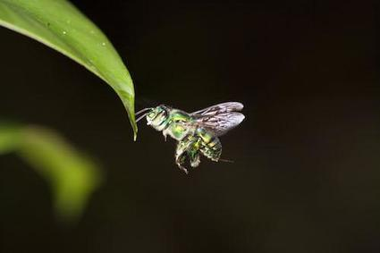 Insect eyes enable drones to fly independently | Lund University | Cultibotics | Scoop.it