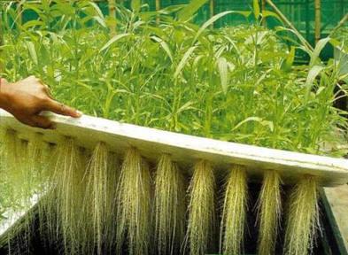 Aeroponics - Growing Plants in Air. - knowplus.org | Sustainable Living | Scoop.it