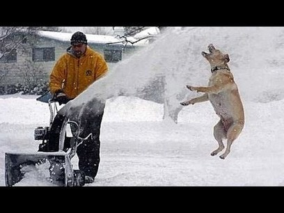 Funny dogs and cats playing in the snow - Funny animal compil | staged | Scoop.it