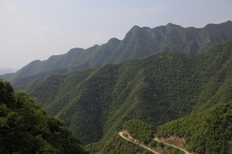 Visiting fine tea plantations in China « Discovering Tea | Food and Drink multinationals | Scoop.it