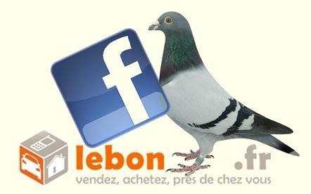 Ami Facebook recherche pigeon pour arnaque au bon coin   Réseaux Sociaux : Twitter, Facebook, Google+, Pinterest   Scoop.it