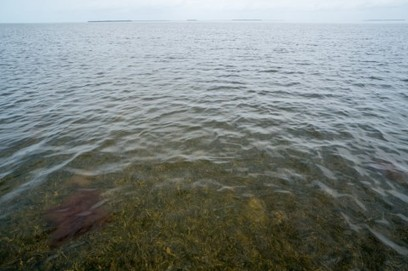 This massive seagrass die-off is the latest sign we're failing to protect the Everglades | Sustain Our Earth | Scoop.it