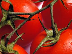 Comer tomates reduce el riesgo de derrame cerebral   Curiosidades en ciencia   Scoop.it