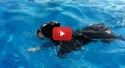 Water Dog! - Bones the Boston Terrier Swimming in the Pool (Video) | Boston Terrier Dogs | Scoop.it
