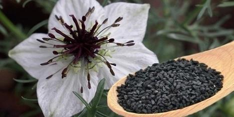 HEALTH BENEFITS OF BLACK CUMIN SEEDS | Recipes Zone | Scoop.it