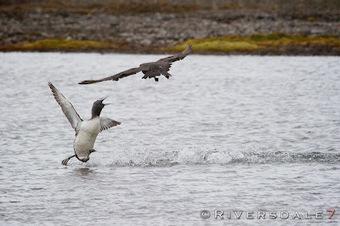 MV FRAM EXPEDITION BLOG: photos magnifiques !! | Arctique et Antarctique | Scoop.it