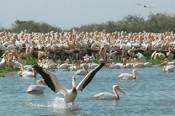 Zones humides : La conservation des oiseaux peut booster le ... - Le Soleil | EPE tourisme durable | Scoop.it