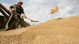Wheat soars after Russian crop failure - FT.com | The Barley Mow | Scoop.it