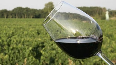 France - France to be world's top wine producer despite fall in exports   Year 9 Geography - Changing Places   Scoop.it